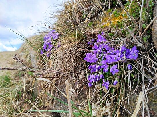 Daiano, Italien: La primavera..non si ferma neanche in zona rossa...