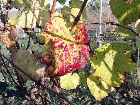 Abbadia di Montepulciano, إيطاليا: L'autunno incalza....
