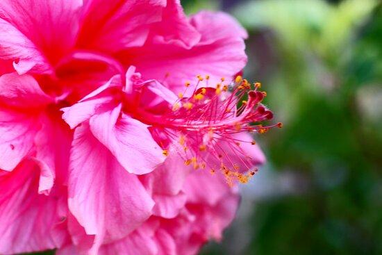 Detalle de las flores del jardín