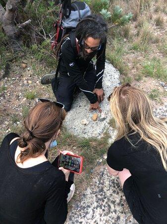 Informative fynbos hike