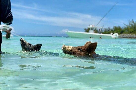 Tour privato in barca di Eleuthera e Rose Island con maiali nuotatori
