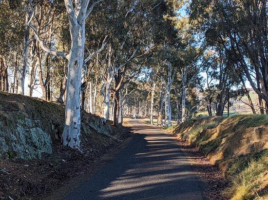 Tumbarumba - Rosewood Rail Trail