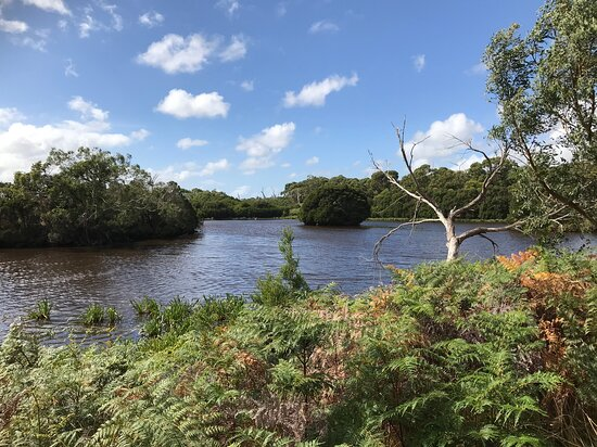 Bald Hills Creek Wildlife Reserve