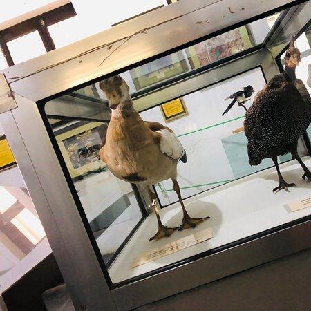 Давольно интересный музей с фото и чучелами животных и немного истории . Час достаточно чтоб все неспела посмотреть. Вход 12.000 шиллингов