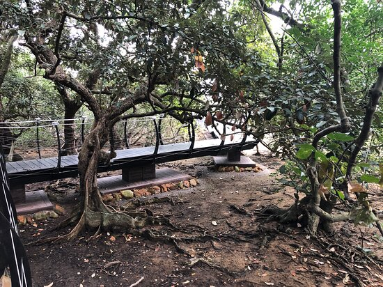 Lai Chi Wo Nature Trail - elevated walkway through the forest