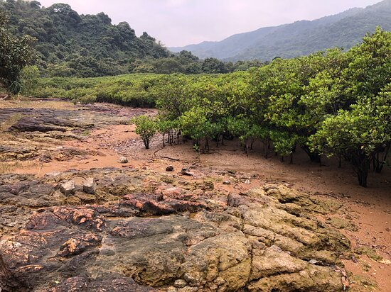 Lai Chi Wo Nature Trail - the mangrove forest