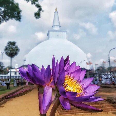 The Visit Lanka Tours - Kandy
