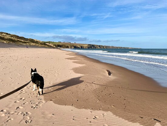 Arguably one of the best sandy beaches in Angus & in a sheltered secluded location. The beach is split by the Lunan Water entering the sea; this is the north side.