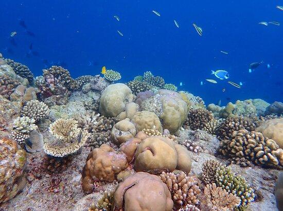 eastern reef February 2021
