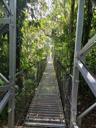 Hanging Bridges Walk in Arenal Volcano Image