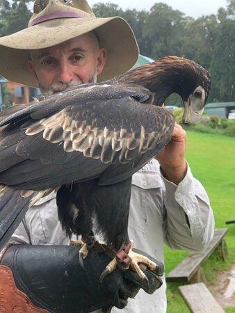 OReillys Rainforest Retreat - Birds of Prey with Mark