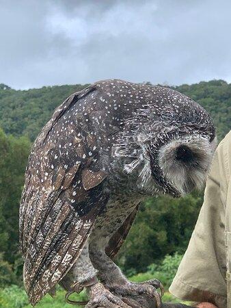 OReillys Rainforest Retreat - Wildlife Encounters with Mark
