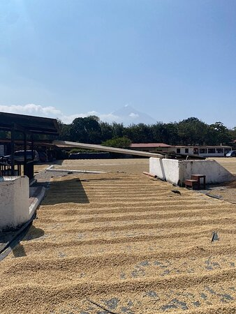Antigua ATV Coffee Tour: Coffee Processing