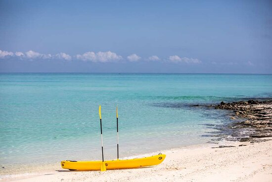Yellow kayak on beach with two paddles