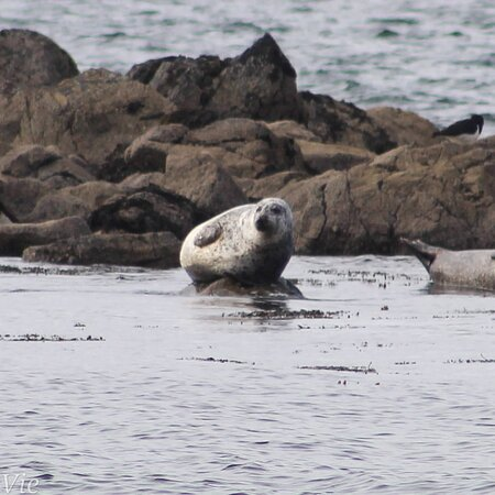 Lendalfoot, UK: Wee drive out n seen the seals