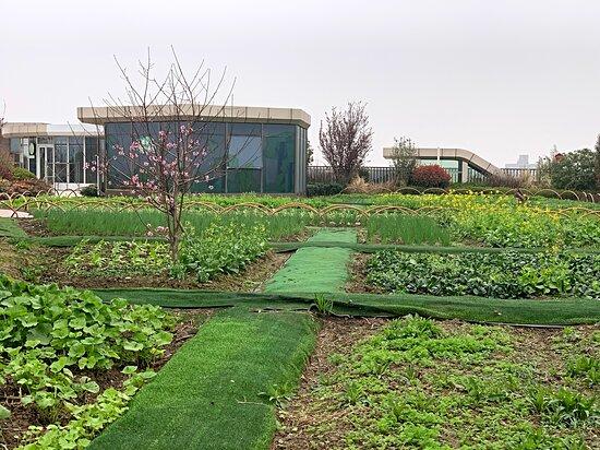 Ewin Sky Farm