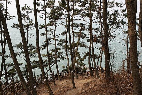 서천 마량리 동백나무숲 전경