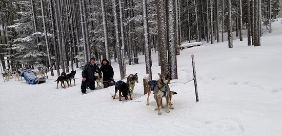 This is our dog sled team. Mazor, Valla, Violet, Andy, River, Stymie and Anchorge.