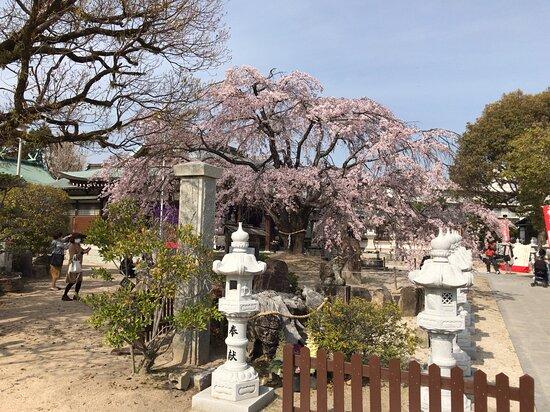 Kannon Shrine
