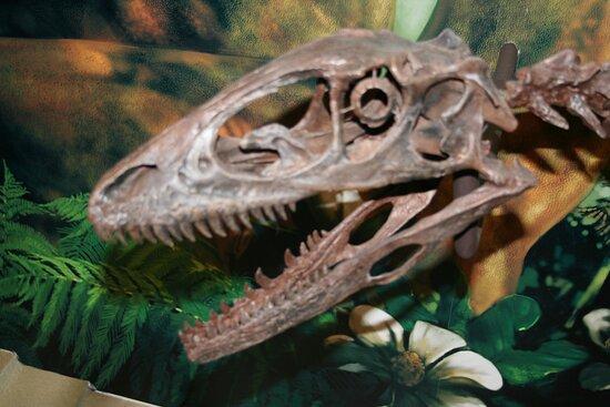 Dinosaur Skeleton in Museum