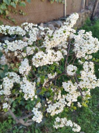 Flores de primavera.