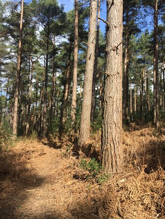 7.  Angley Wood, Cranbrook, Kent