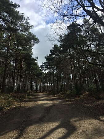9.  Angley Wood, Cranbrook, Kent