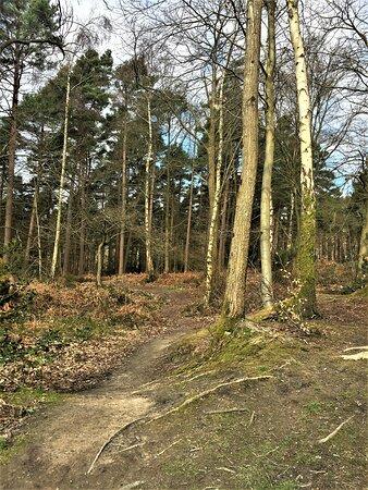 12.  Angley Wood, Cranbrook, Kent