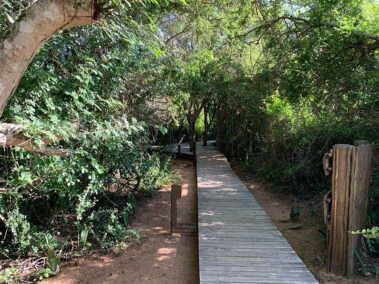 Tembe Elephant Park Photo