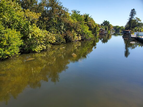 Berkeley Canal Manatee Observation Point