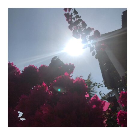 Blue skies and bougainvillea ♥️  #goainanutshell #summerishere  We look forward to serving you 🌺  Dinner Only 7pm Onwards 7499922517