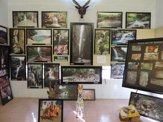 Seshachala Vanadarshini Forest Museum