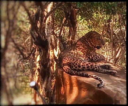 Yala National Park, Sri Lanka: The tiger