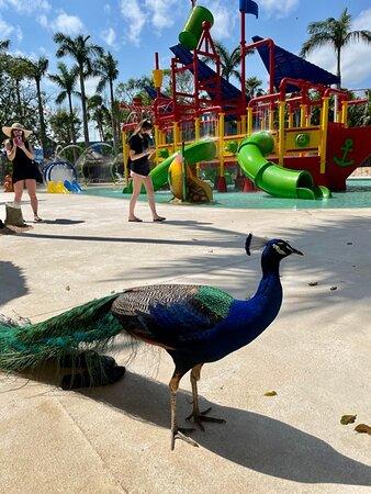 Lots of wildlife walking around the resort grounds
