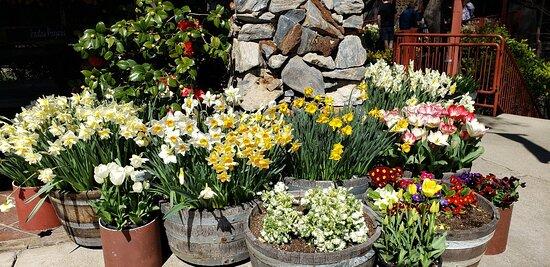 The many flowers around this Vinyard.