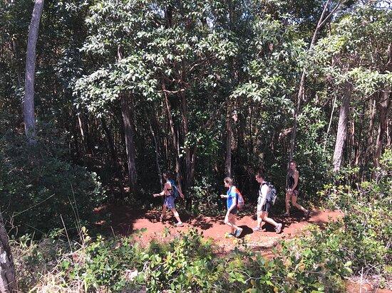 Customised private tour of Oahu!: Hawaiian hiking