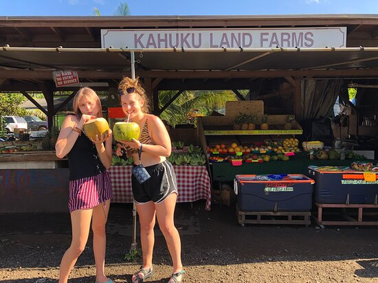 Customised private tour of Oahu!: Ice cold coconuts