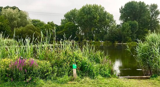Broadlands Lakes Coarse Fishery