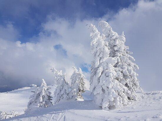 Jahorina, Bosnien und Herzegowina: Lots of snow