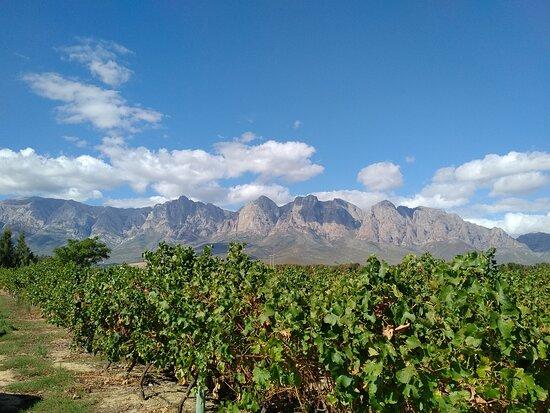 Seven Oaks Winery