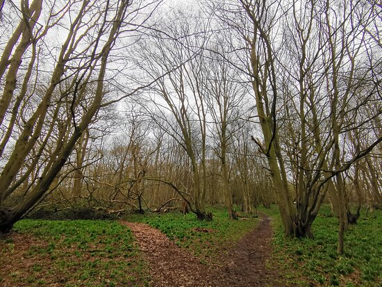 Swan Wood March 2021