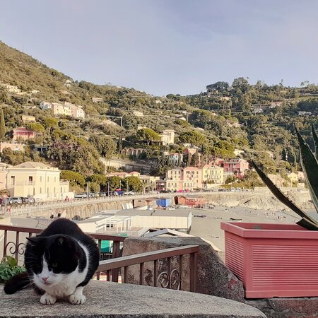 I have never seen a Ligurian seaside village without cats popping up from every corner... ❤