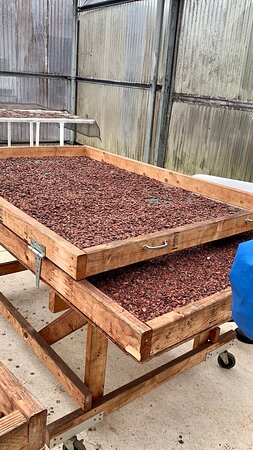 Sorting the roasted beans