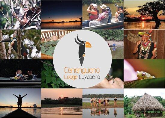 Nueva Loja, Equador: CANAGUENO LODGE- LO MEJOR DE LA AMAZONIA ECUATORIANA-CUYABENO  CANAGUENO LODGE- IL MEGLIO DELL'AMAZZONIA ECUADORIANA-CUYABENO