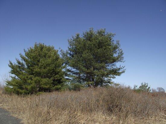 Webhanet Marsh Trail
