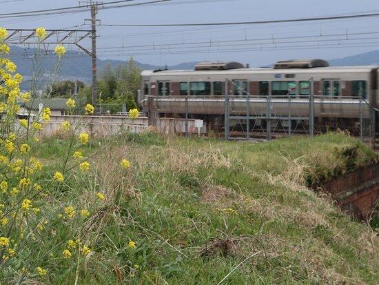 Tokaidohonsen Old Okamigawa Tunnel