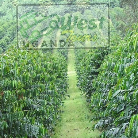 More than just a cooking class, coffeeTour is an authentic travel experience that offers unbeatable insight into everyday life. Your hosts bring you inside their home to teach you how to cook traditionally #SipiFalls #Uganda