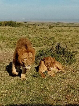 Mbutu Tours & Safaris