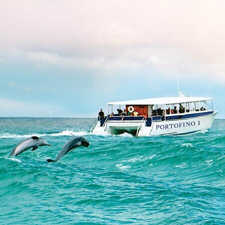 Premier Dolphin Cruise