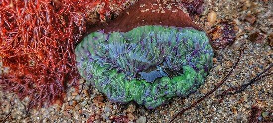 Anemone rockpool